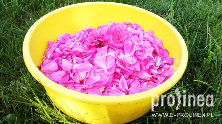 konfitura z płatków róży przepis