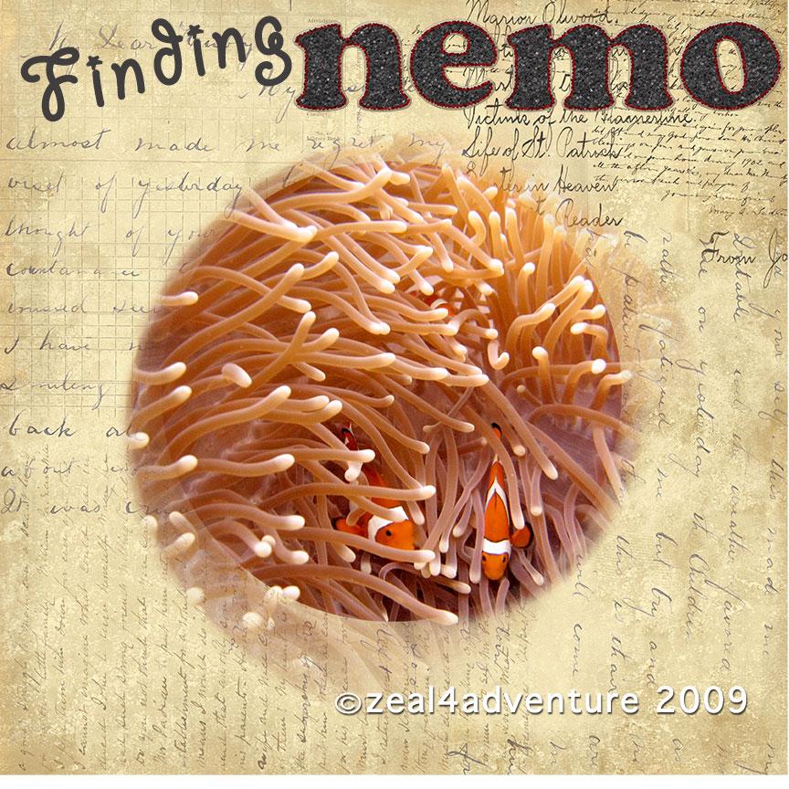 ws10-finding-nemo