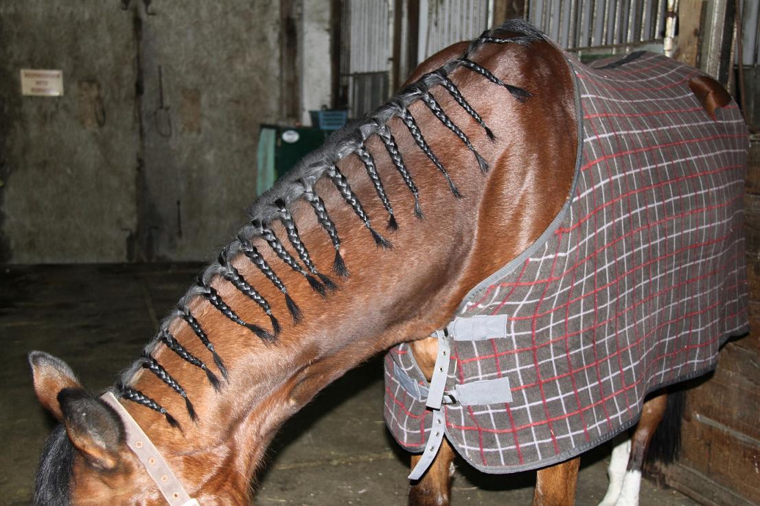 Jak Robić Koreczki I Inne Fryzury Koni Zebra Z Klasą