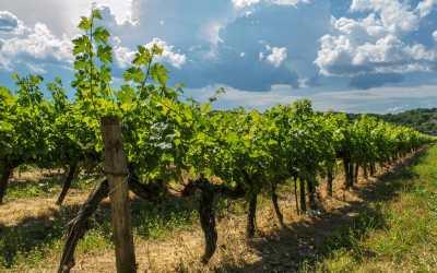 Québec : Quel réel marché pour les viticulteurs français ?
