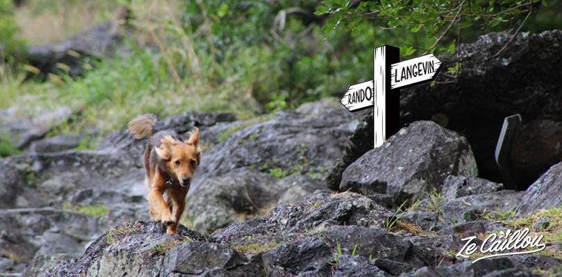 Hike or have a walk with your dog in La Reunion by Ze Caillou