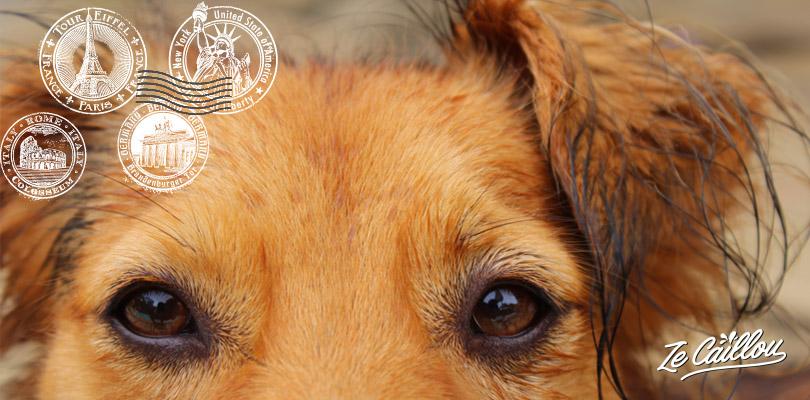 Voyager avec un chien à l'étranger par Ze Caillou