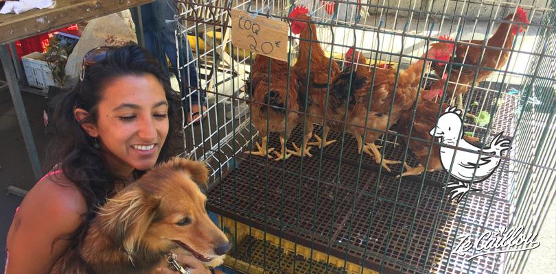 Carrys, oeufs frais...acheter des poules et coq aux marchés forains de l'île de la Réunion