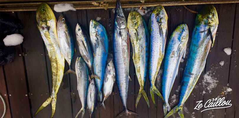 Sea breams, tunas, yellow tuna, marlin and other indian ocean fishes... caught during the deep-sea fishing day.