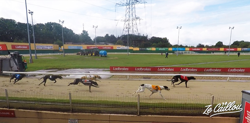 Assist a greyhounds race in Crawford stadium close to London
