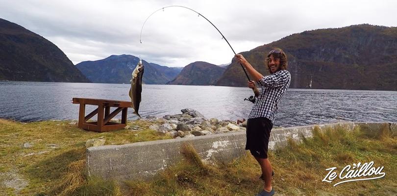 Partir à la pêche en Norvège, Lieu jaune, noir, morue en péchant en Norvège