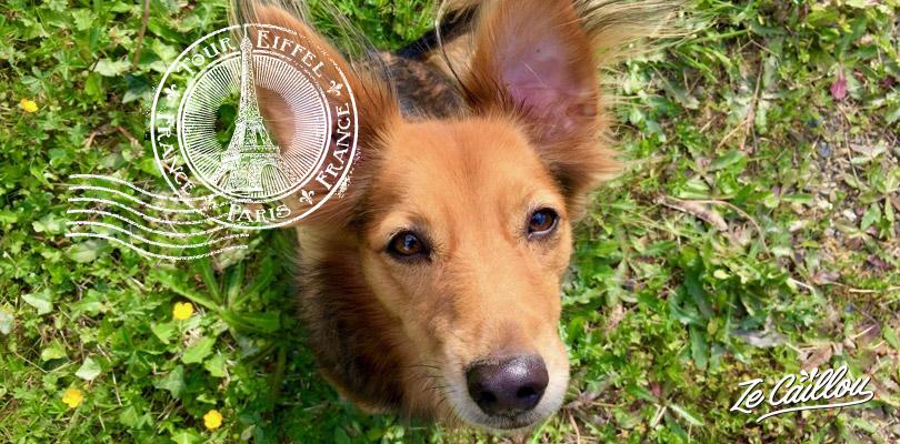 Tout savoir pour voyager en avion avec son chien ou animal de compagnie sur notre blog voyage.