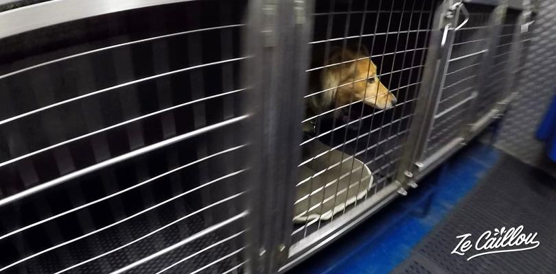 Chenils intérieurs dans certains ferrys en Europe, pour voyager avec son chien.