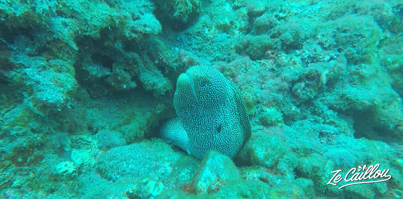 We'll see many morays in the marina reserve of La Reunion.