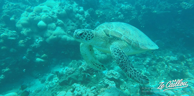 We had the chance to see: tortles, ray, octopus and many different indian ocean fishes.