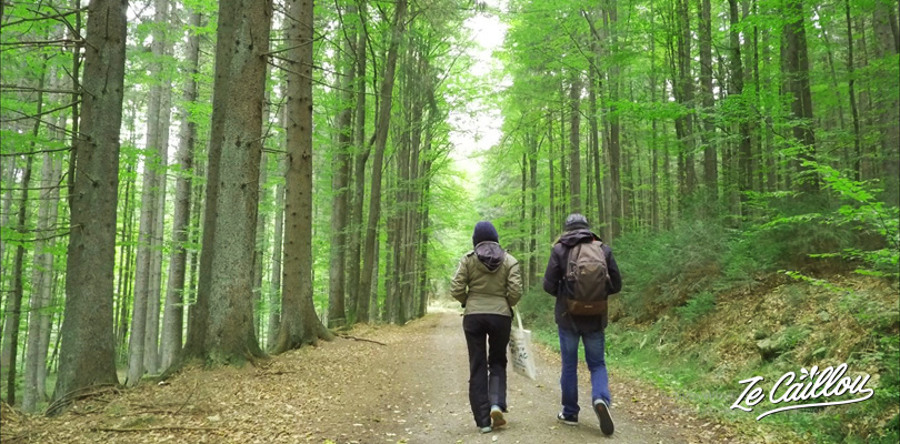 Discover Sumava park, the largest forest in Europe, and hike in nature.
