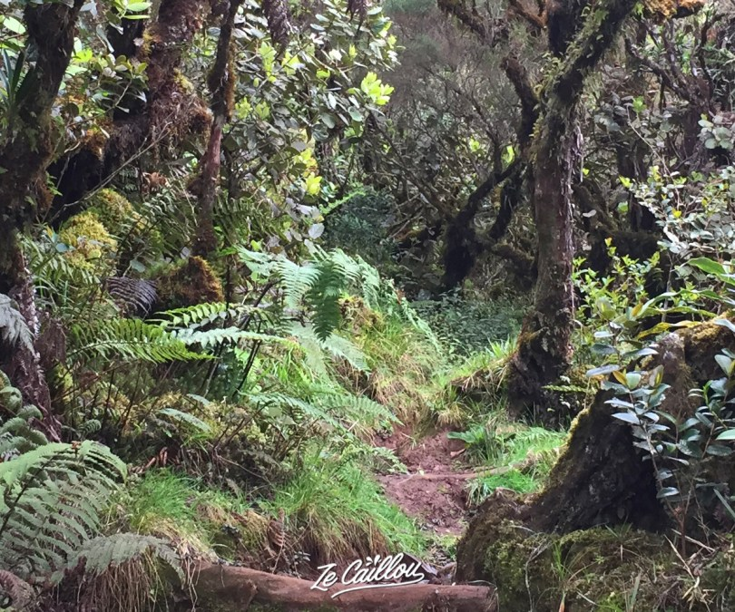 Forest path from Bourg Murat to Volcan during our ggr2 day 8.
