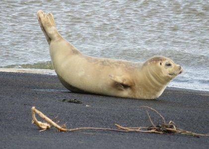 Soorten zeehonden