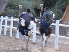 Day Trips in Garden Route and Klein Karoo
