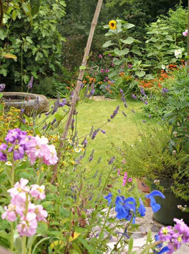 summer colours in the garden.