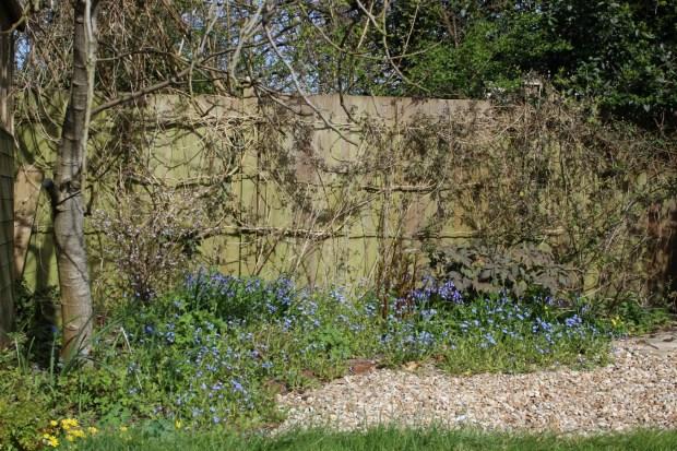 Spring is here in my cottage garden!