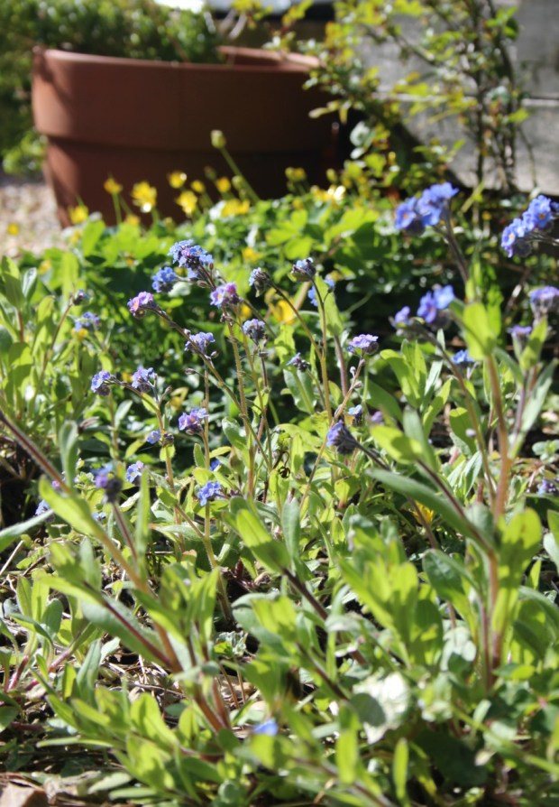 weeds and pots