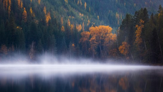 Fog Lake Forest Tree Autumn Season 4K Screen Server Download