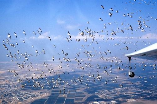 500 מיליון ציפורים מגיעות לכאן עם ויזה ליום אחד (באדיבות יוסי לשם)