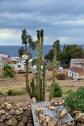 Cactus in Yumani