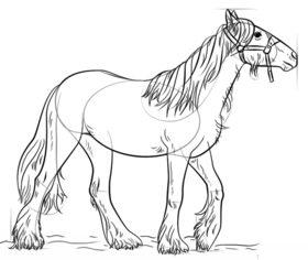 Pferd Zeichnen Lernen Schritt Fr Schritt Tutorial