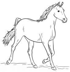 Pferd 3 zeichnen lernen schritt für schritt tutorial