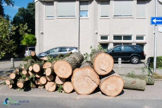 Gekapte boom Henriëtte van Lijndenlaan