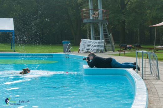 Honden zwemmen in Zwembad Dijnselburg
