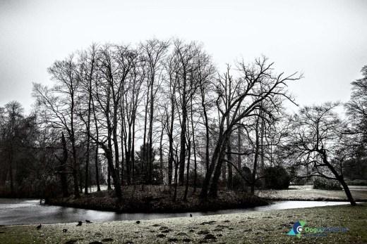 De winter heeft alle blaadjes van de bomen gekregen