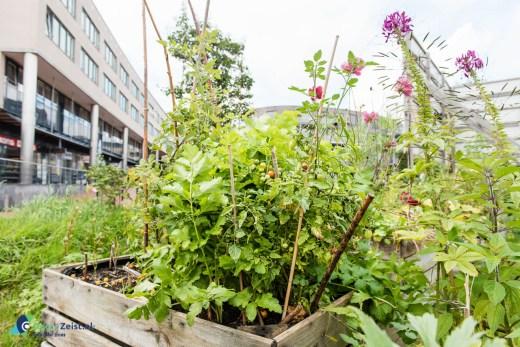 Stadslandbouw in de allegrotuin. Oranje Fonds draagt €500 bij aan Platform StadslandbouwZeist