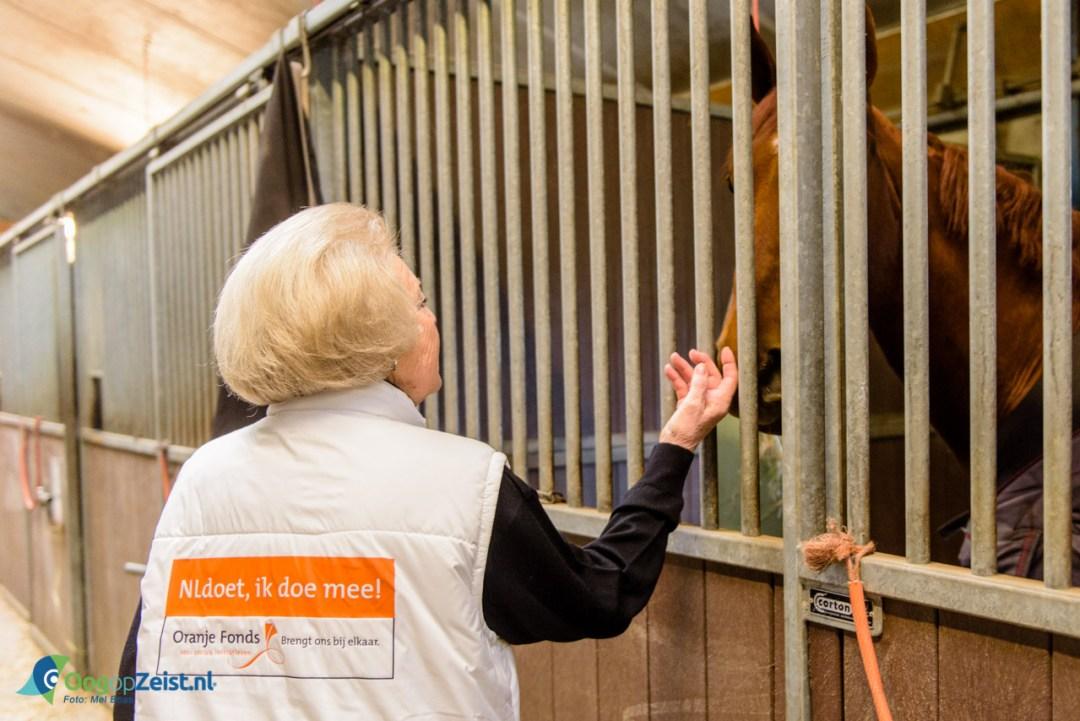 De koninklijke vrijwilligers hielpen met het op stal zetten van de paarden.