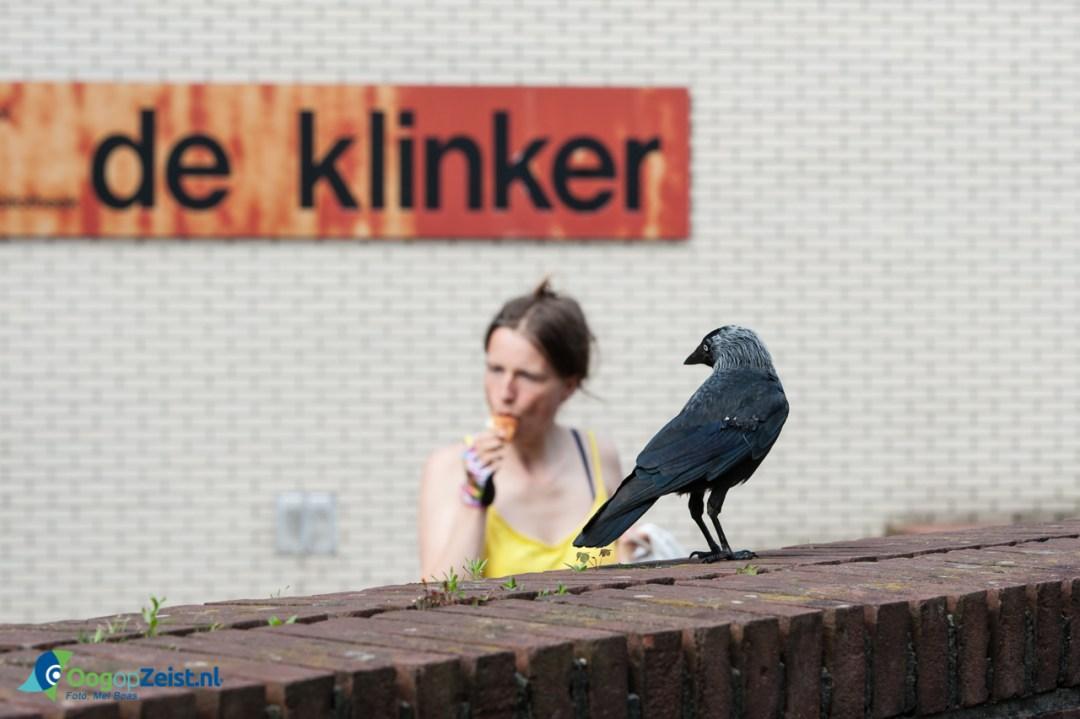 Vogel bij de Klinkert