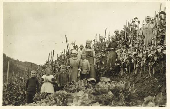 Familie von Gebhard und Fanny Lutz-Giger mit Hilfskräften bei der Weinlese in Thal, 1925