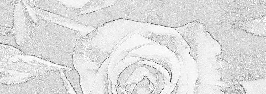 Rosen gezeichnet