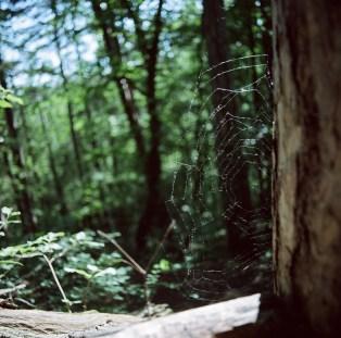 Im Wald am Kahlenberg