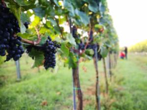 Weingut Zeitlberger