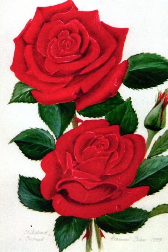 Gemälde von Hanni Bieri: rote Rosen. Zeitlupe.