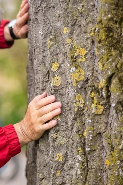 Detailaufnahme: Die Hände eines Senioren an einem Baumstamm.