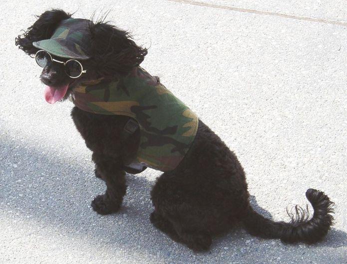 "US-Militär entfesselt ""Cyber-Dogs ofWar"""