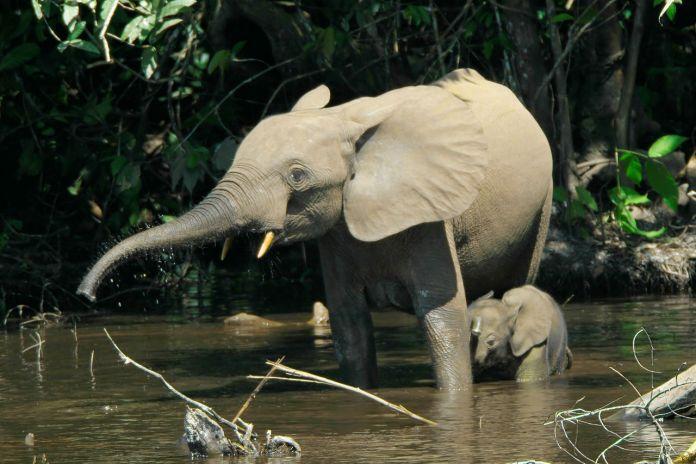Babyelefant in Gefahr