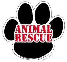 AnimalRescue