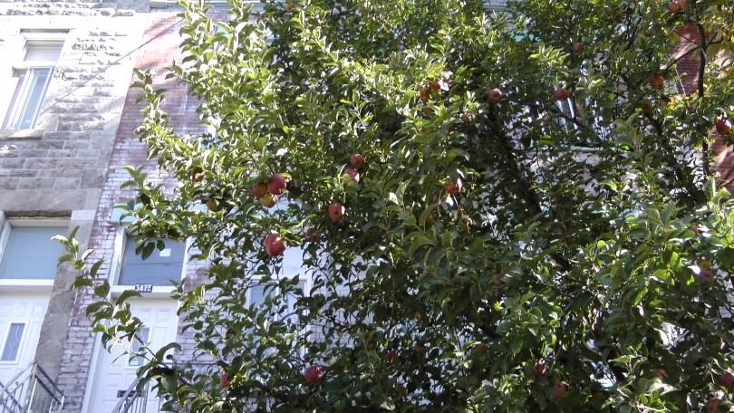 Apples on de L'Esplanade