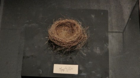 Bird's Nest made from Margie Gillis' hair from 1984