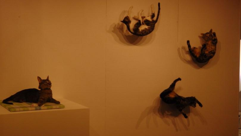 Kate Puxley, Strip, Senza Terra: Cat - Van Horne, Beaumont, Pointe Saint Charles, Naturalized Cats