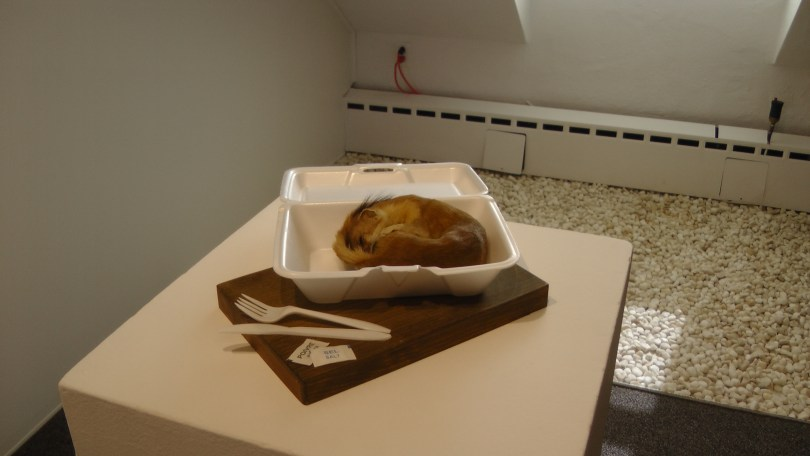 Kate Puxley, Take Out, 'Habitat' series, Naturalized weasel, styrofoam container, plastic fork