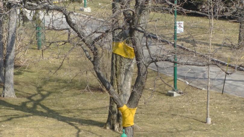 Madeleine Pippa Bartlett, Tree-sweater, 2012