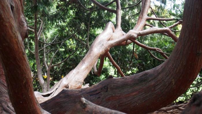 つるつるの巨木