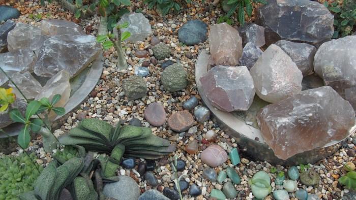 石みたいなサボテン