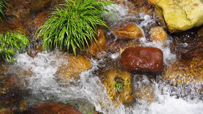 沢の水の流れ