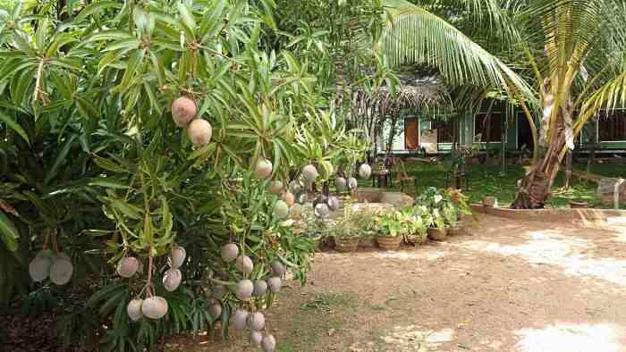 ガマゲダラの庭